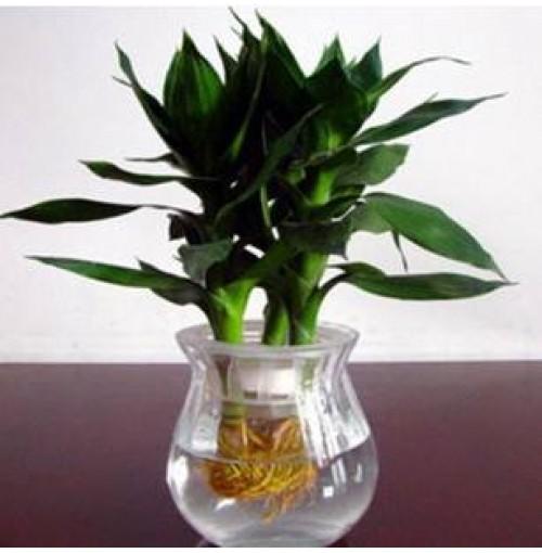 Buy indoor plants in nepal on best price for Top 20 indoor plants